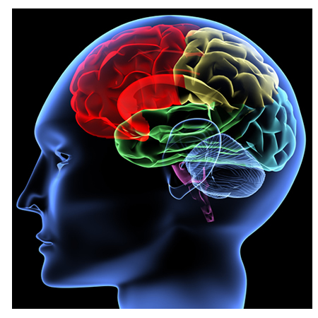 Beyninizi genç tutan 7 öneri